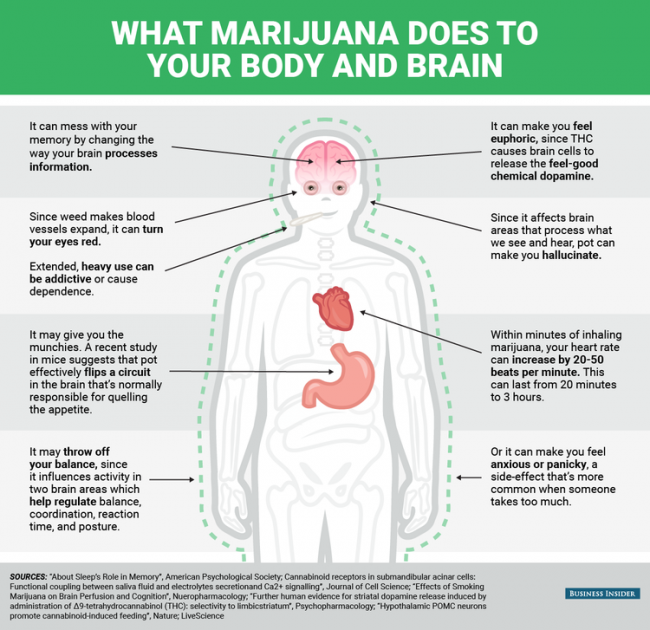 THC and Your Body